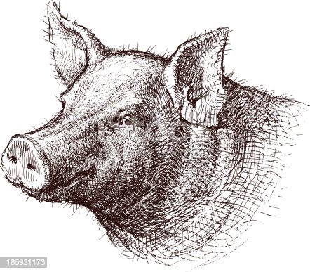 The vector drawing of a head of a pig.