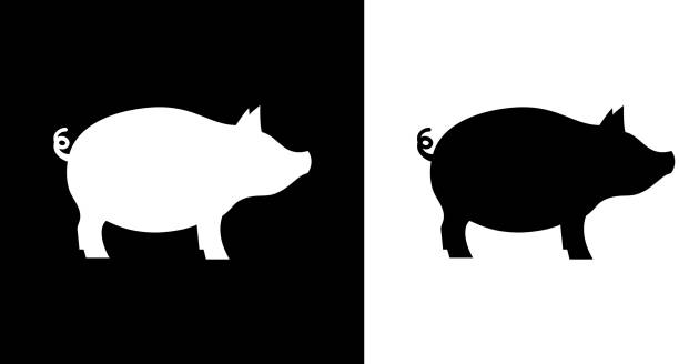 Pig. Pig.This royalty free vector illustration features the main icon on both white and black backgrounds. The image is black and white and had the background rendered with the main icon. The illustration is simple yet very conceptual. pork stock illustrations