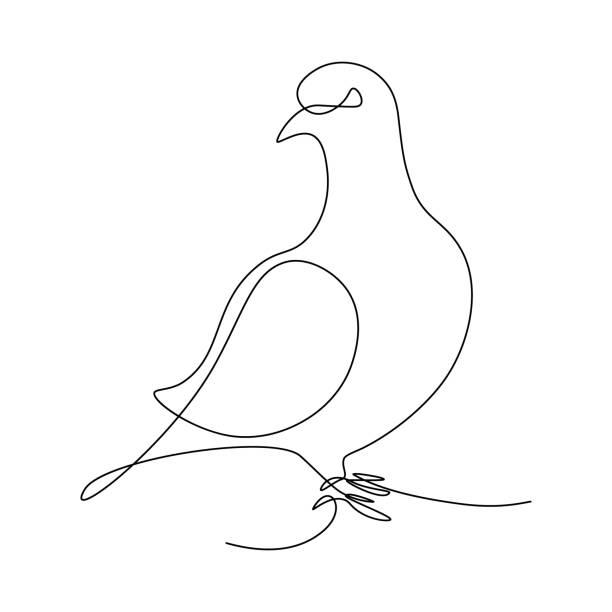taubenvogel - einzelnes tier stock-grafiken, -clipart, -cartoons und -symbole