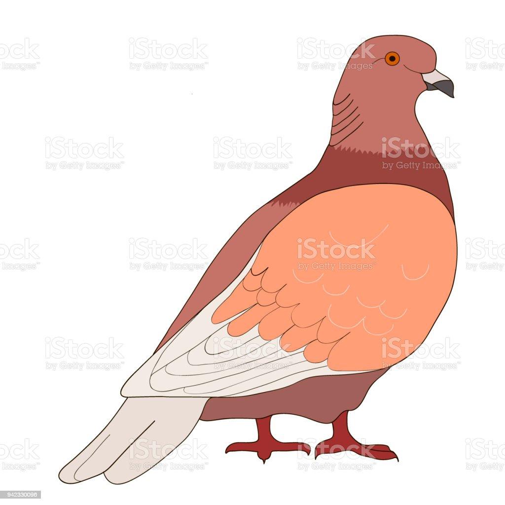 Güvercin Kahverengi Güvercin Vektör çizim Stok Vektör Sanatı Abd