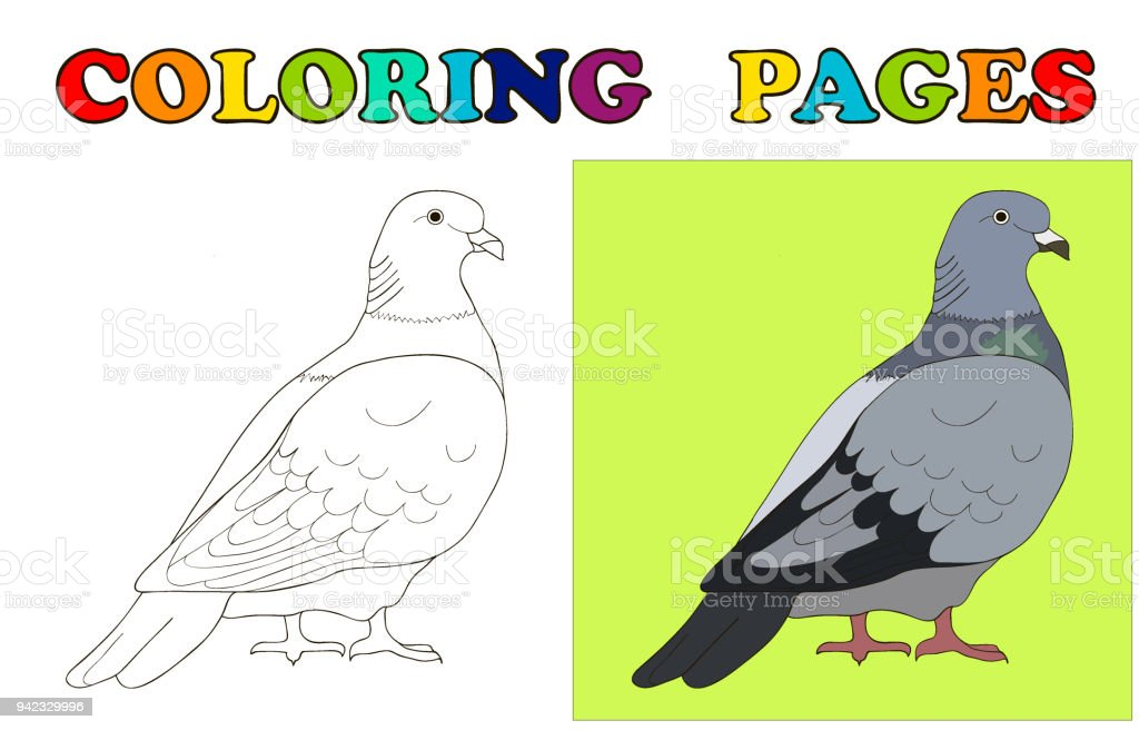 Pigeon Dove To Be Coloring Pages Book For Preschool Kids Vector Illustration