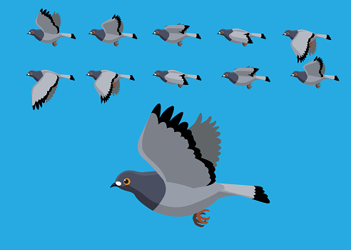 Pigeon Flying Motion Animation Sequence Cartoon Vector Illustration