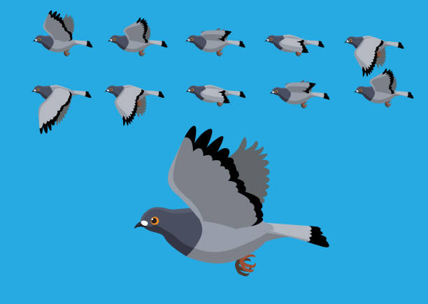 Pigeon Flying Motion Animation Sequence Cartoon Vector Illustration Animal Character EPS10 File Format pigeon stock illustrations