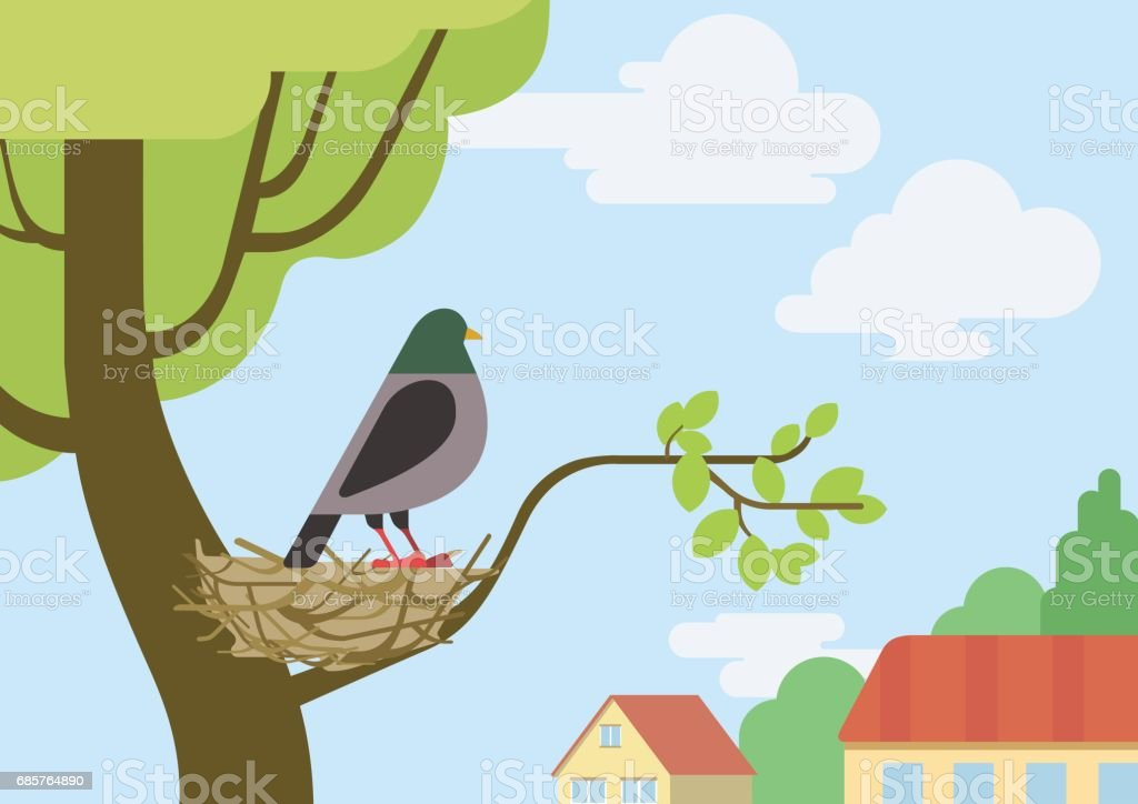 Pigeon (male dove) on street tree branch nest flat design cartoon vector wild animals birds. Flat zoo nature children collection. pigeon on street tree branch nest flat design cartoon vector wild animals birds flat zoo nature children collection - immagini vettoriali stock e altre immagini di albero royalty-free