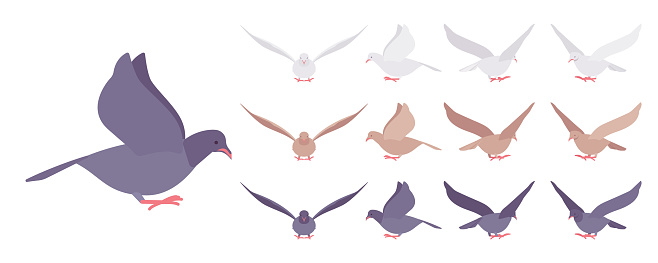 Pigeons and doves set, domestic or street bird in flight
