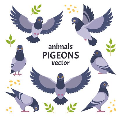 Pigeons collection.