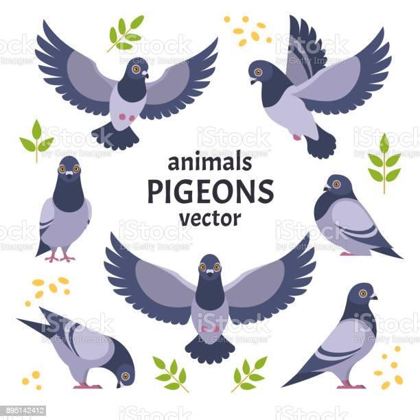 Pigeons collection vector id895142412?b=1&k=6&m=895142412&s=612x612&h=iwjpfufbajpfsul imkfllb8acfksqdziztmjbmsnh4=