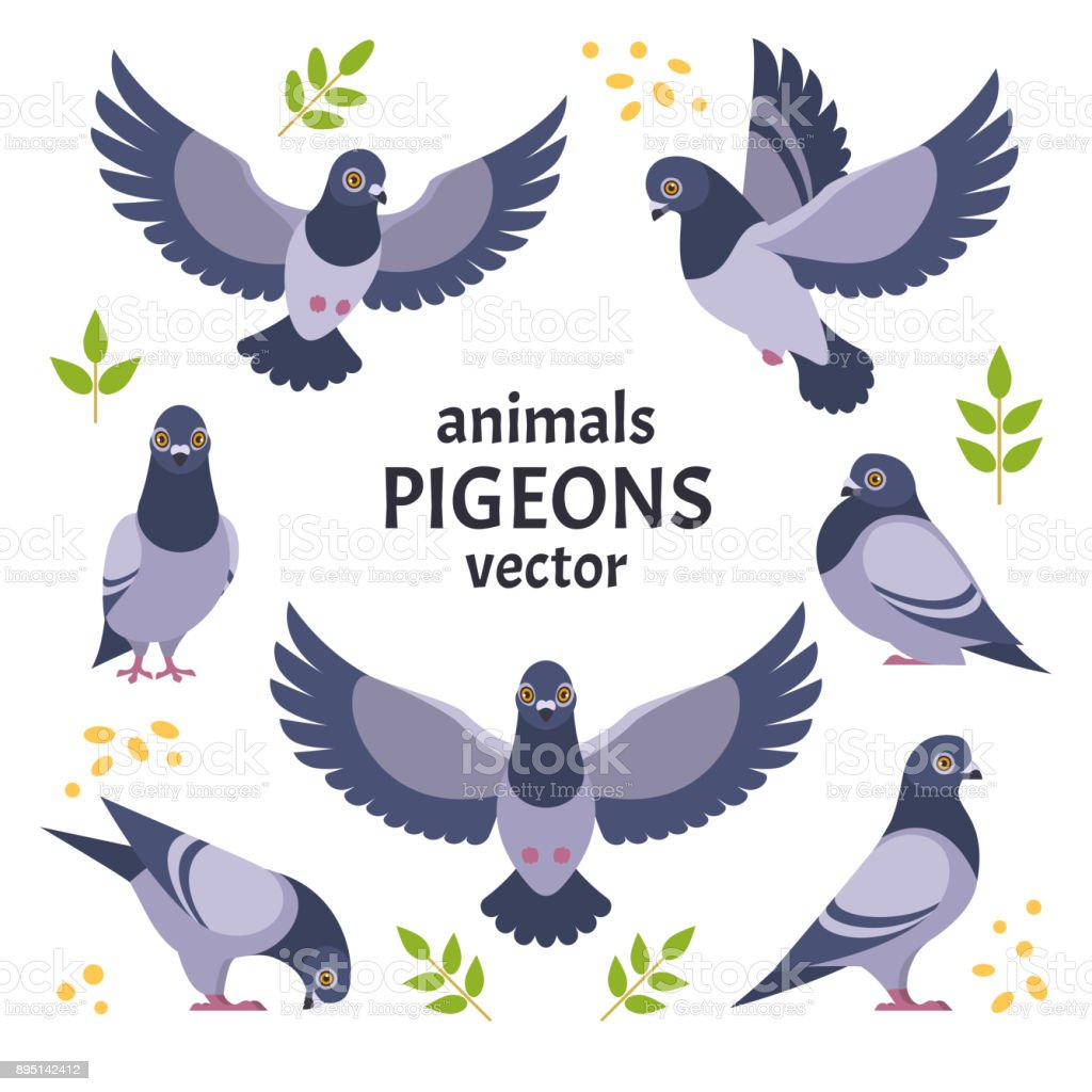 Pigeons collection. vector art illustration