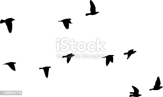 Vector silhouettes of a group of pigeons flying.