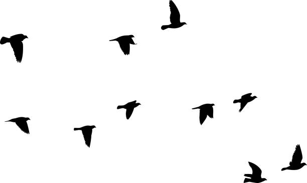pigeons flying silhouettes 2 - birds stock illustrations