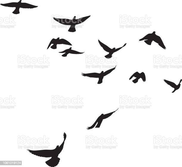 Pigeons flying silhouettes 4 vector id1061019124?b=1&k=6&m=1061019124&s=612x612&h=1ykh4q cjijh3jkld9jhbpjyypj3ixlromslbqdsqqw=