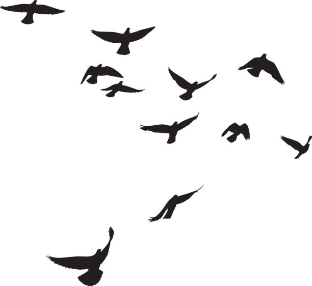 pigeons flying silhouettes 4 - птица stock illustrations