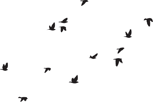 Pigeons Flying Silhouettes 6