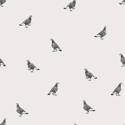Pigeons Repeat Pattern