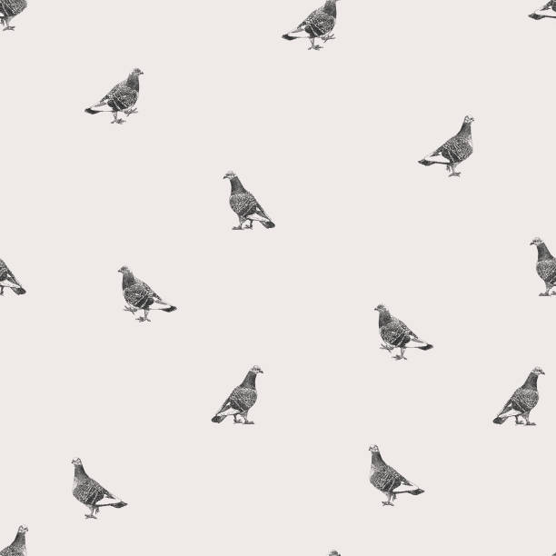 Pigeons Repeat Pattern Vector seamless repeat. All colors are layered and grouped separately. Icons are available in more detail and in stroke form from my iStock folio. Easily editable. pigeon stock illustrations