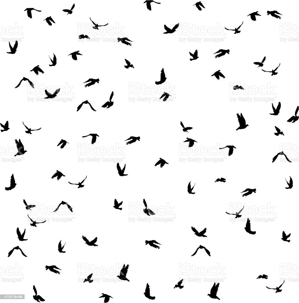 pigeons set for peace concept and wedding design. Flying dove vector art illustration