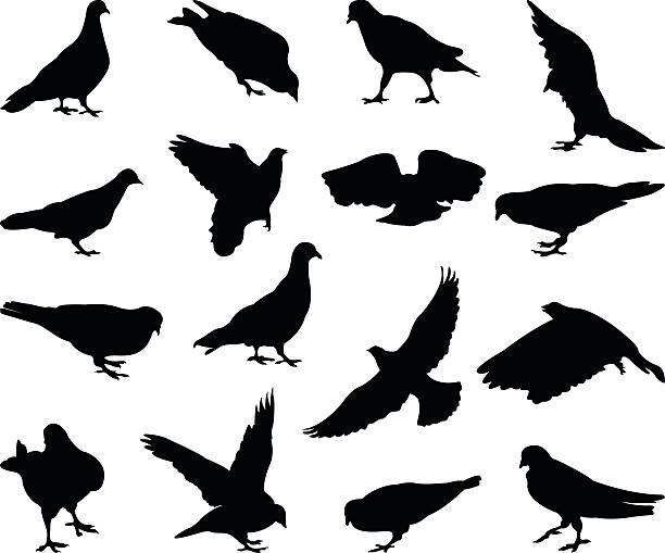 pigeons silhouette vector file of pigeons silhouette pigeon stock illustrations