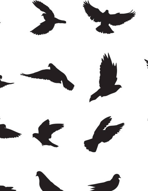 Pigeons Pigeons Silhouette diving into water stock illustrations