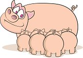 Fully editable vector illustration of a group of piglets suckling.