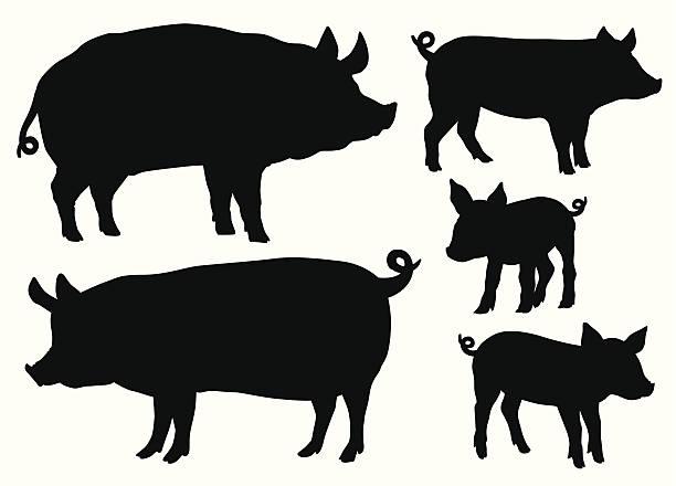 ilustraciones, imágenes clip art, dibujos animados e iconos de stock de los cerdos y cochinillos - animales de granja