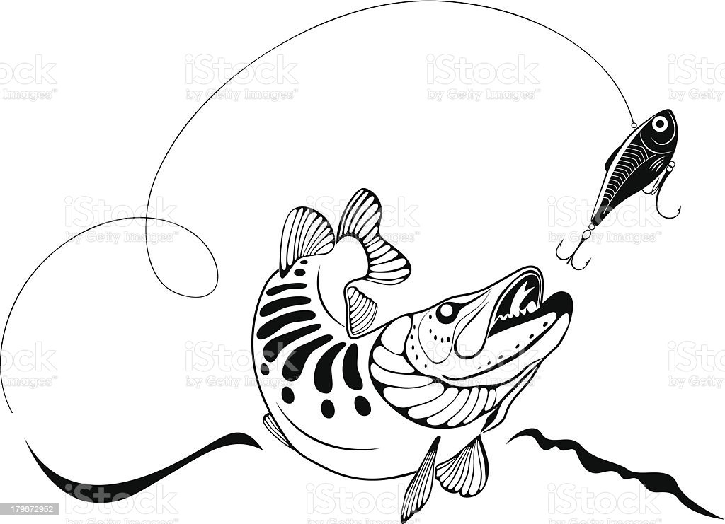Pike fish and lure royalty-free stock vector art