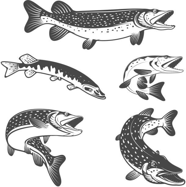 stockillustraties, clipart, cartoons en iconen met pike fish icons. design elements for fishing club or team. - wildplassen