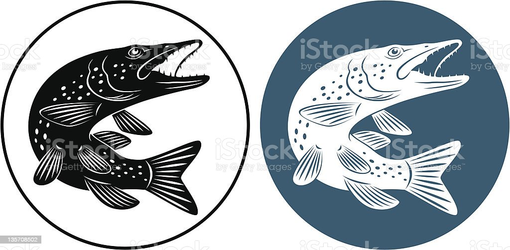 Pike fish in black and white, and blue and white royalty-free pike fish in black and white and blue and white stock vector art & more images of animals hunting