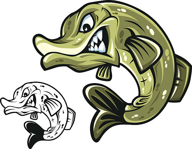 Pike Fish Mascot Vector Pike. High detailed vector illustration of Pike. Could be used in logo,emblems and advertisment pike fish stock illustrations