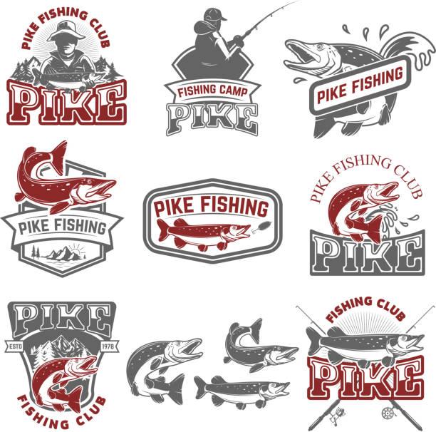 pike fishing club. fischers symbole. design-elemente für label, wahrzeichen, zeichen. vektor-illustration. - seehecht stock-grafiken, -clipart, -cartoons und -symbole