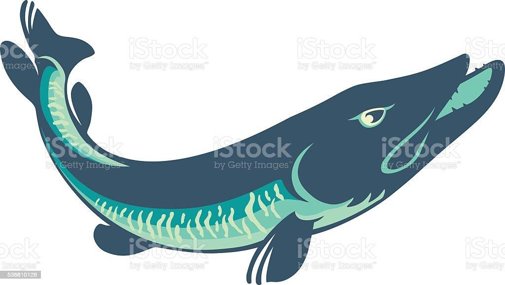 royalty free perch fish clip art vector images illustrations istock rh istockphoto com Fish Clip Art Bluegill Fish Clip Art