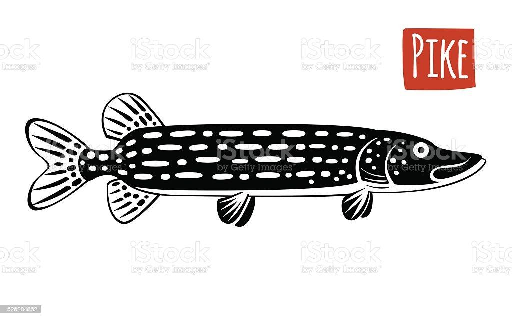 Pike, Vector illustration humoristique - Illustration vectorielle