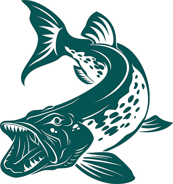 Pike Pike symbol pike fish stock illustrations