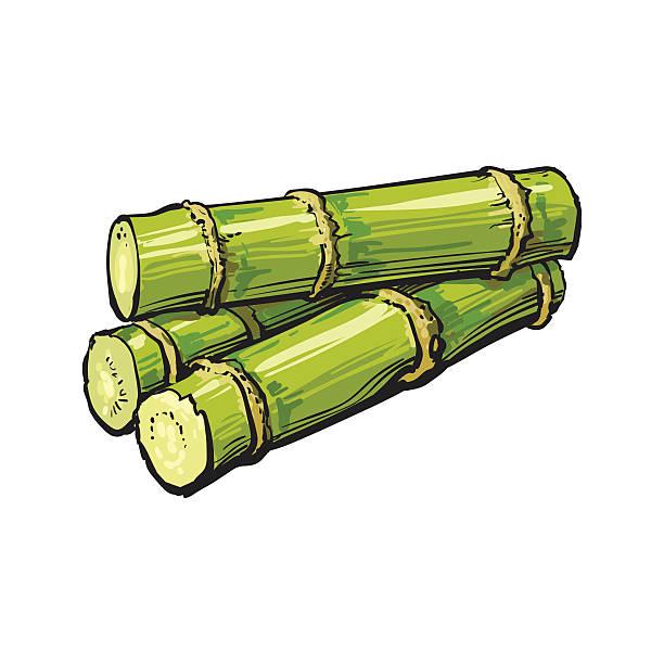 illustrazioni stock, clip art, cartoni animati e icone di tendenza di pile of fresh raw green sugar cane - canna da zucchero