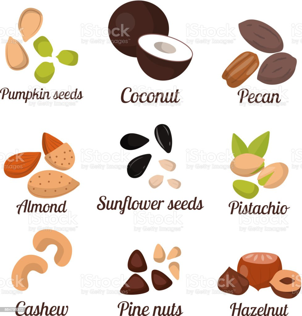 Piles of different nuts pistachio peanut walnut tasty seed vegetarian nutrition vector illustration vector art illustration