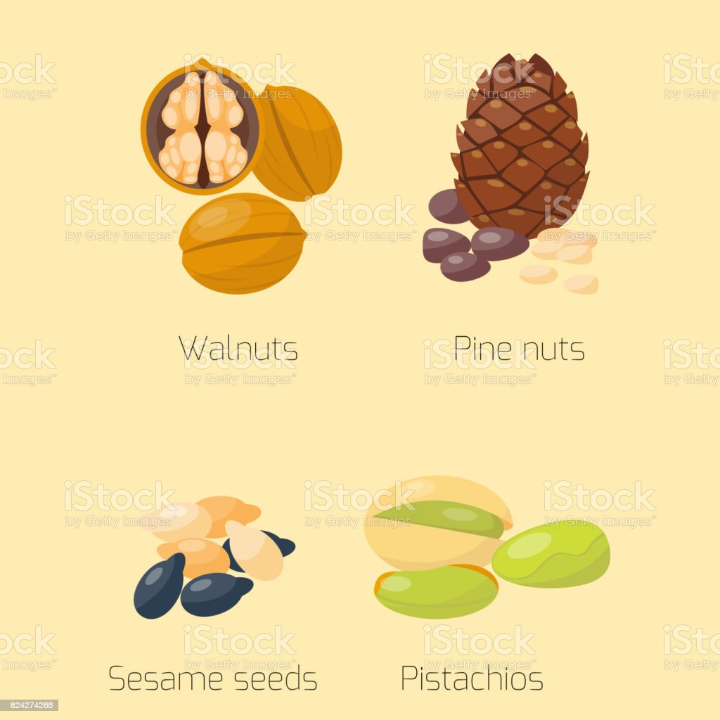 Piles of different nuts pistachio walnut tasty seed vegetarian nutrition vector illustration vector art illustration