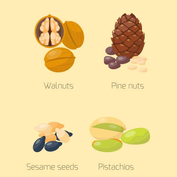 Piles of different nuts pistachio walnut tasty seed vegetarian nutrition vector illustration vector art illustration