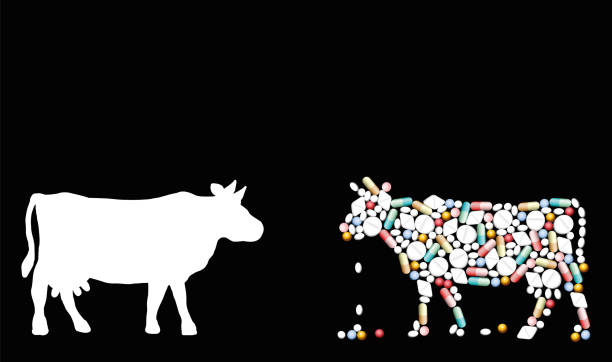 illustrazioni stock, clip art, cartoni animati e icone di tendenza di pills that shape a cow. symbol for cattle healthcare issues, medicine, pharmacy, antibiotics and diet - isolated vector illustration on black background. - antibiotico