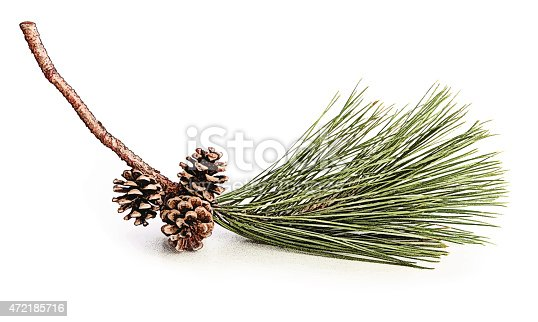 istock Pine Bough and Cones 472185716