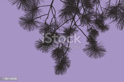 Vector Pine Boughs background.