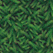 Winter background with pine branch. Vector floral pattern.