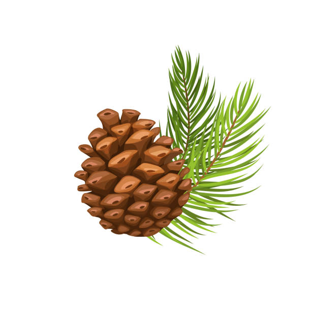 pine branch with cone Vector pine branch with cone. Illustration in cartoon style. december illustrations stock illustrations