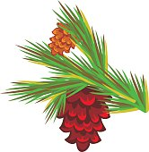 Pine branch with decorative cones. Vector clip art.