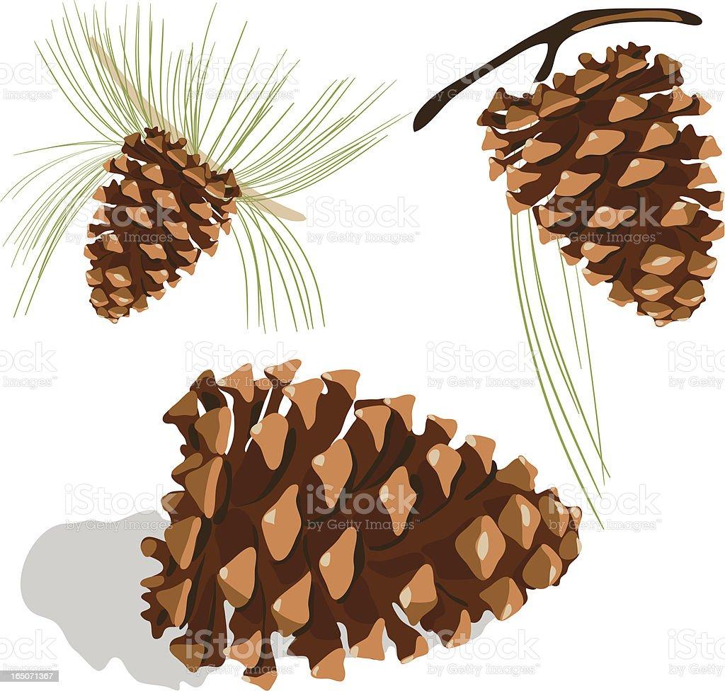 Pine cone royalty-free stock vector art