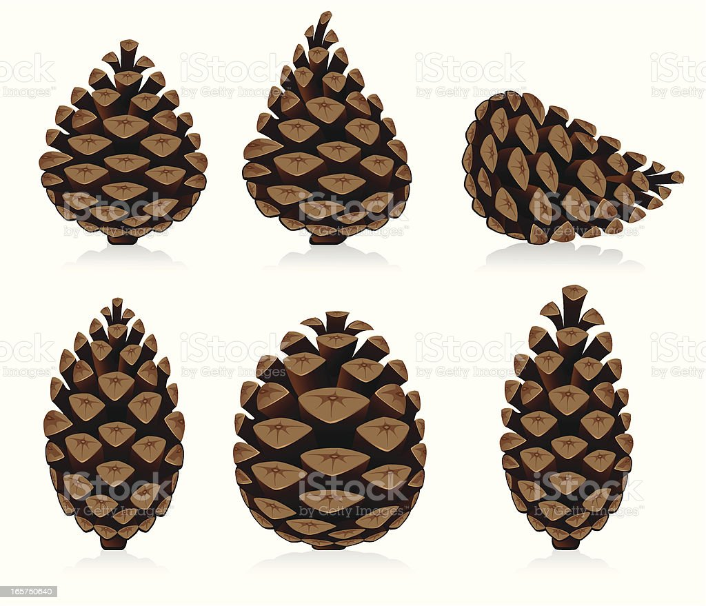 Pine Cone royalty-free pine cone stock vector art & more images of brown