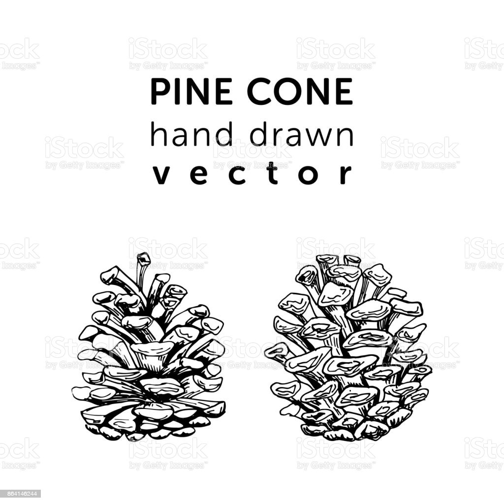 Pine cones in simple style for your holidays design. royalty-free pine cones in simple style for your holidays design stock vector art & more images of art