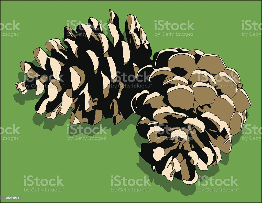 Pine Cones royalty-free pine cones stock vector art & more images of beauty in nature