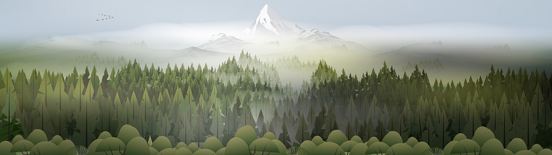 Pine forest mountains in mist panorama