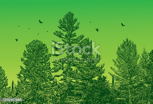 istock Pine forest with flock of birds 1335452585