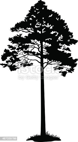 Pine Tree and Grass Black Silhouette Isolated on White Background. Vector