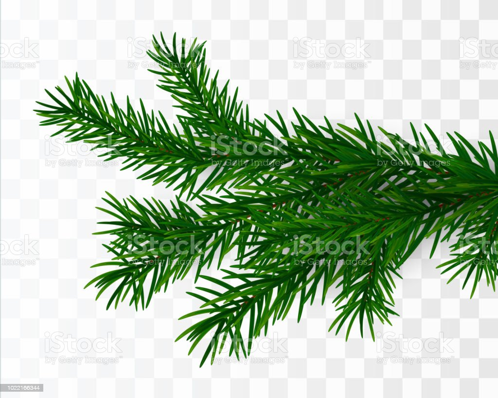 Christmas Branch Vector.Pine Tree Branch Vector Christmas Tree Stock Illustration Download Image Now